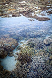 Coral reef in shallow water. S at Reunion Island, in the Indian Ocean Stock Images