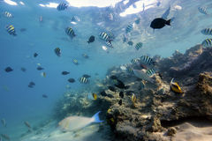 Coral-Reef in shallow water with fishes around Royalty Free Stock Photos