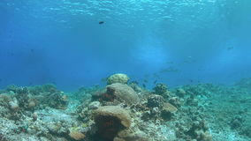 Coral reef in shallow water. Shallow water of an coral reef with plenty fish. 4k footage stock video