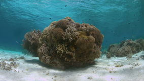 Coral reef in shallow water. Shallow water of an coral reef with plenty fish. 4k footage stock footage