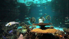 Coral reef with sharks and fish stock footage