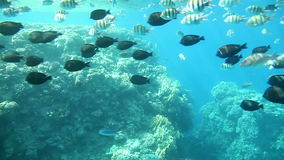 Coral reef, Sharm El Sheikh. Egypt. Underwater footage in the Red Sea. Egypt stock video footage