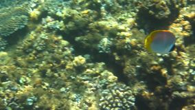 The Coral Reef. Shore of the Pacific Ocean stock footage