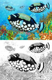 The coral reef - small colorful coral fishes - with coloring page Royalty Free Stock Images