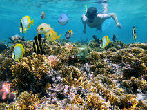 Coral reef and snorkeler royalty free stock photography