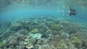 Coral Reef and Snorkeler stock footage