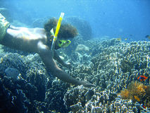 Coral reef snorkeling Stock Photography