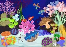 Coral reef. With soft and hard corals. Ecosystem Stock Photos