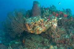 Coral Reef South FLorida Stock Images