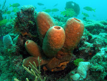 Coral reef in south Florida. This coral reef image was taken at Barracuda Reef off the coast of Dania Beach, Florida stock photo