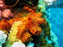 Coral reef with sponge Royalty Free Stock Images
