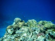 Coral Reef subacquea Fotografia Stock