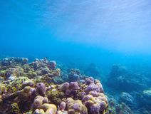 Coral reef with sunlight ray in blue water. Tropical seashore underwater photo. Coral ecosystem with sea animals and plant. Exotic island sea snorkeling scene stock images