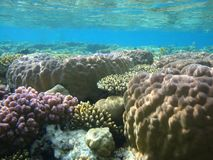 Colorful underwater world of the Red sea stock photos