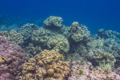 Coral reef at Surin national park, Thailand Stock Photo