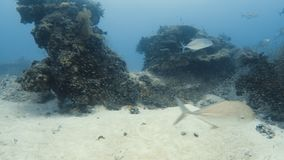 A coral reef surrounded by different fish. An underwater wide shot of a coral reef that is surrounded by small and medium sized fish stock footage
