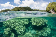 Coral Reef Surrounded by Islands. Limestone islands surround a coral reef in Palau, Micronesia. Palau harbors high marine biodiversity and offers spectacular Royalty Free Stock Photo