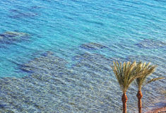 Coral reef in Taba Royalty Free Stock Image
