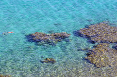 Coral reef in Taba Royalty Free Stock Photography