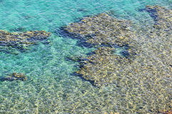 Coral reef in Taba Royalty Free Stock Photos