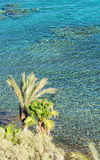 Coral reef in Taba Stock Photography