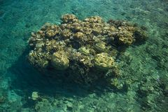 Coral reef tropic nature scenic view through transparent water of Red sea copy space