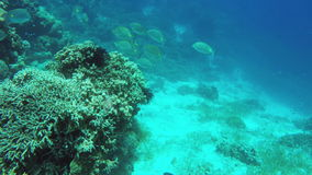 Coral reef and tropical Fish. Many reef fish in the tropical sea on a coral reef.tropical underwater world.Diving and snorkeling in the tropical sea.Travel stock footage