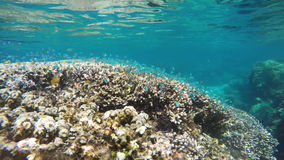 Coral reef and tropical Fish. stock video