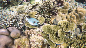 Coral reef and tropical Fish. stock video footage