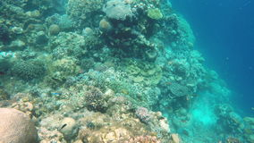 Coral reef and tropical Fish. Many reef fish in the tropical sea on a coral reef.tropical underwater world.Diving and snorkeling in the tropical sea.Travel stock video footage