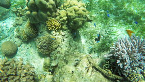 Coral reef and tropical Fish. stock footage