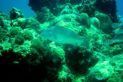 Coral Reef, tropical fish and ocean life in the caribbean sea Stock Image