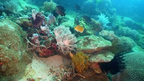 Coral reef and tropical fish. Philippines, Mindoro. stock photography