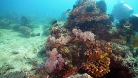 Coral reef and tropical fish. Philippines, Mindoro. stock images