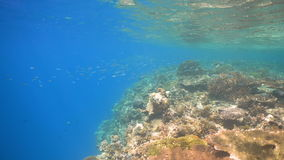 Coral reef and tropical fish.Philippines stock footage