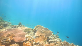 Coral reef and tropical fish.Philippines stock video footage
