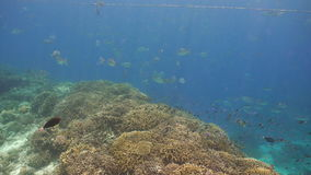 Coral reef and tropical fish.Philippines stock video