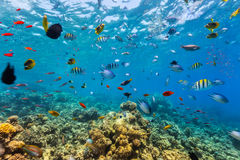 Coral reef and tropical fish in Red Sea Stock Images