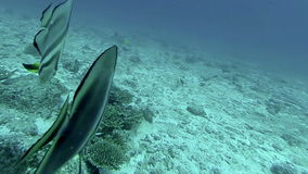 Coral reef and tropical fish at Seychelles. Indian Ocean stock footage