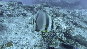 Coral reef and tropical fish at Seychelles. Indian Ocean stock video footage