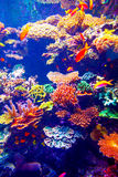 Coral Reef and Tropical Fish Royalty Free Stock Image
