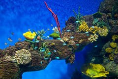 Coral Reef and Tropical Fish in Sunlight Stock Photography
