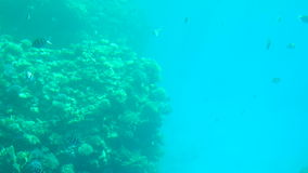 Coral reef and tropical fish in sunlight. Colorful reef underwater landscape with fishes and corals., slow motion. Coral reef with exotic fishes stock video footage