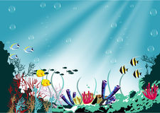Coral reef and tropical fish in sunlight Stock Photos