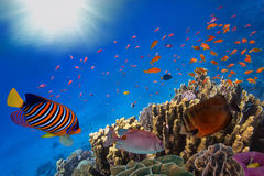 Coral Reef and Tropical Fish in Sunlight Stock Image