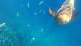 Coral reef and tropical fish in sunlight. stock footage