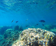 Coral reef with tropical fish underwater image. Fish silhouettes undersea photo. Stock Image