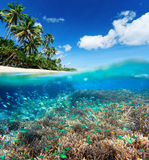 Coral reef in tropical sea. Stock Image
