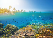 Coral reef in tropical sea on a background of island Stock Photos