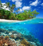 Coral reef in tropical sea. Stock Photos